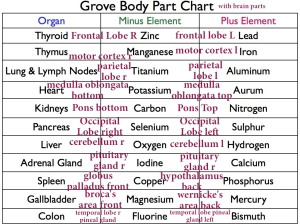brain parts & sides